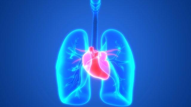 56 Miljoner Till Hjärt Och Lungforskning Linköpings Universitet