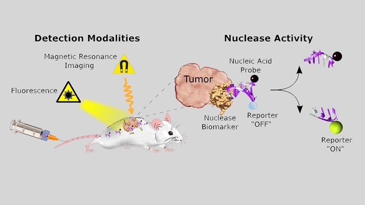 detection modalities nuclease activity