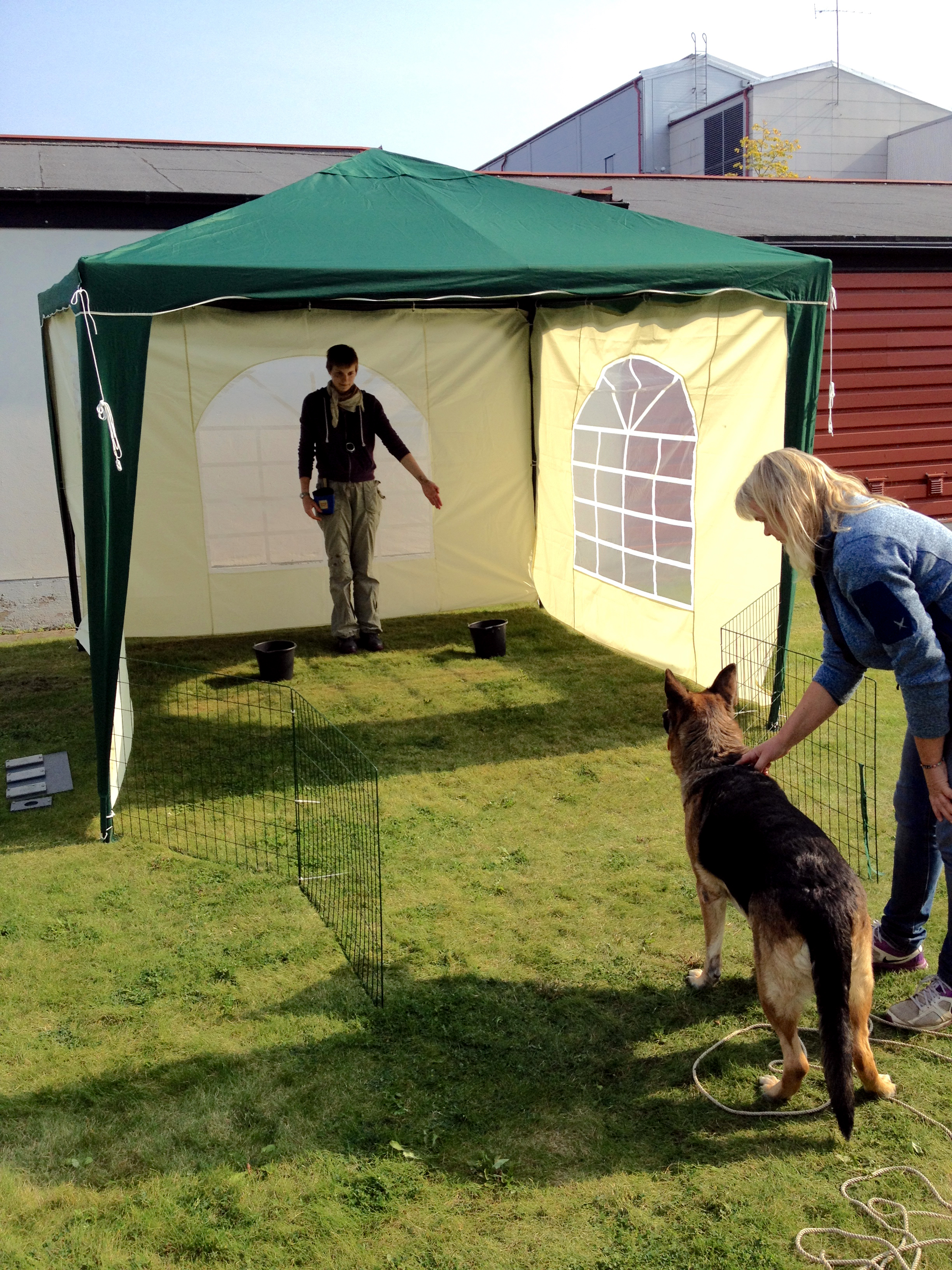 dog participating in pointing test