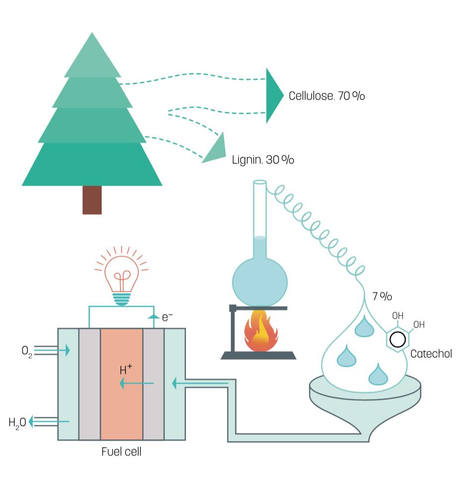 lignin – a supergreen fuel for fuel cells - linköping university