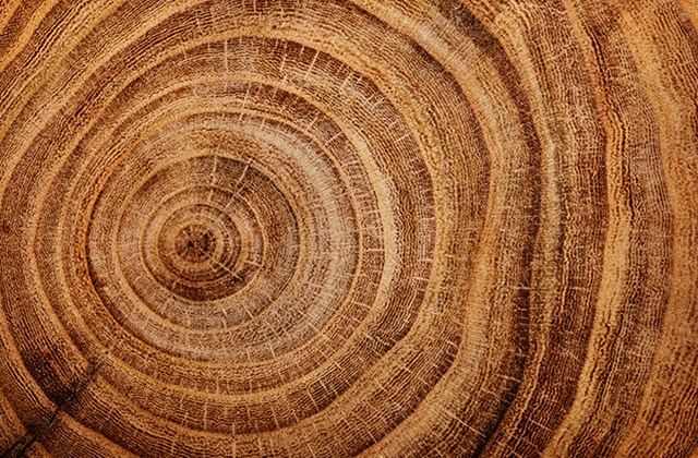 Årsringar / Growth rings
