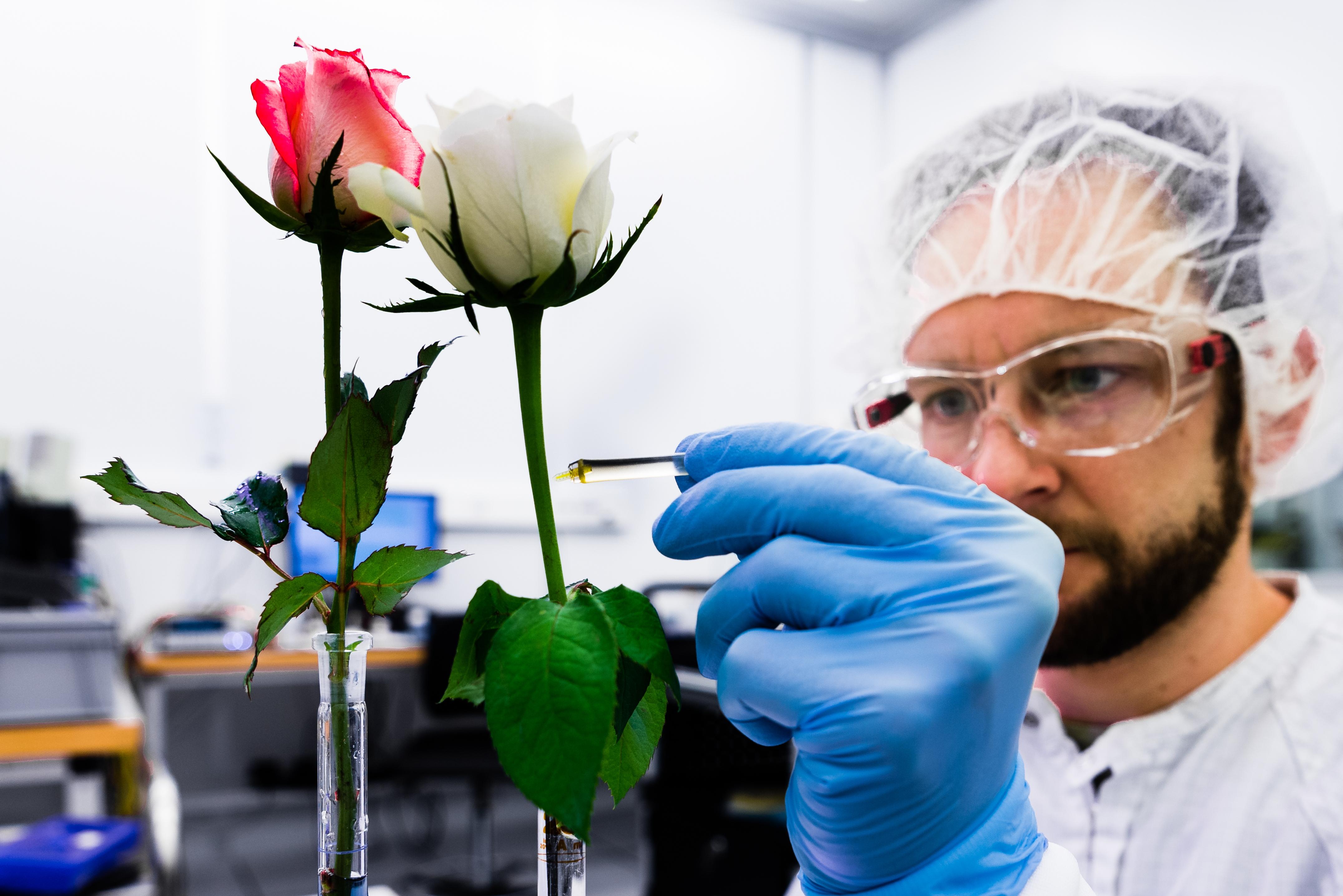 Elektronik styr plantans tillväxt - Linköpings universitet 27d0a92dd4356