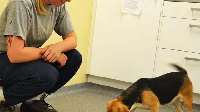 Beagle Dream Reflect Women/'S High Top