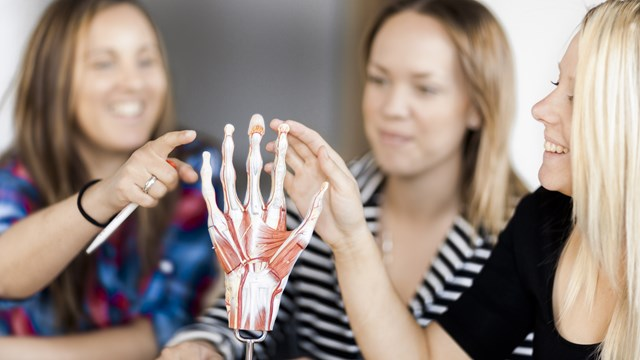 Studenter studerar handens anatomi /  Students study the anatomy of the hand