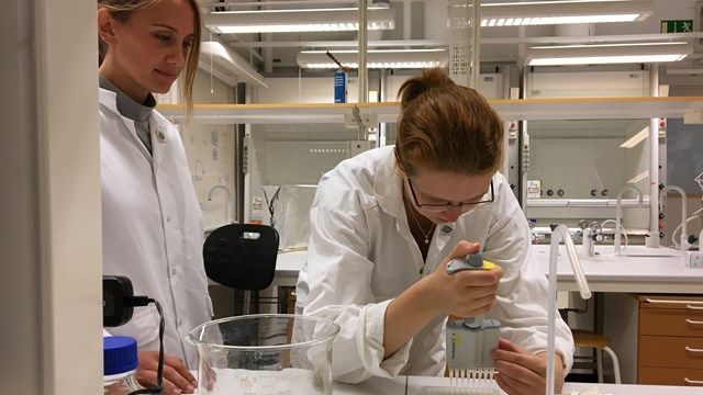 IGEM students in the lab