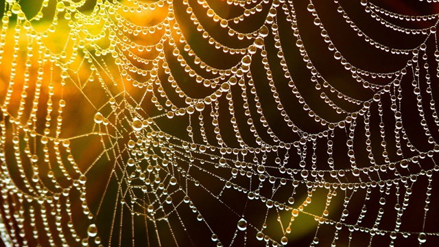 A spider's web with water drops