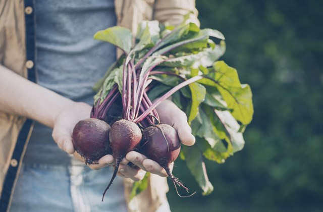 A man holds a harvest of beetrots towards the camera.