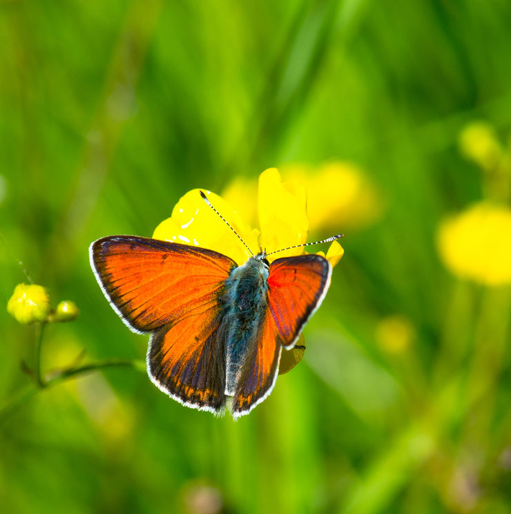 orange butterfly sitting on wild flower