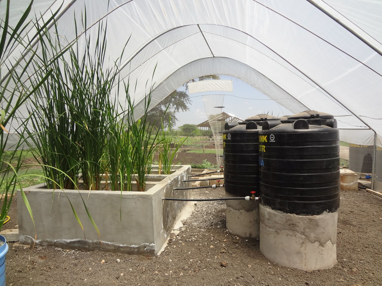 Wetlands to purify water in South African informal townships