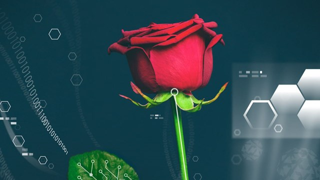 Power plant, organic electronics, a red rose.