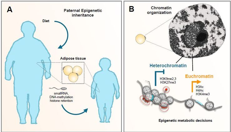 Graph, obesity and epigenetics.