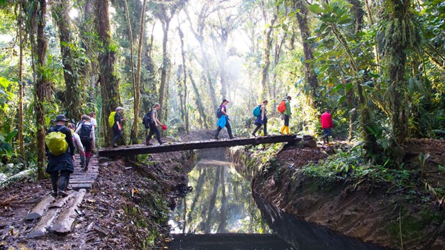 A group of people crosses a bridge in the rainforest