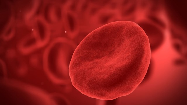 Red blood cell.