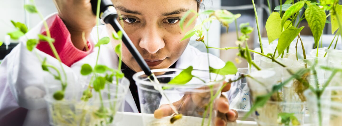 Researcher in a lab developing electronic plants for energy storage.