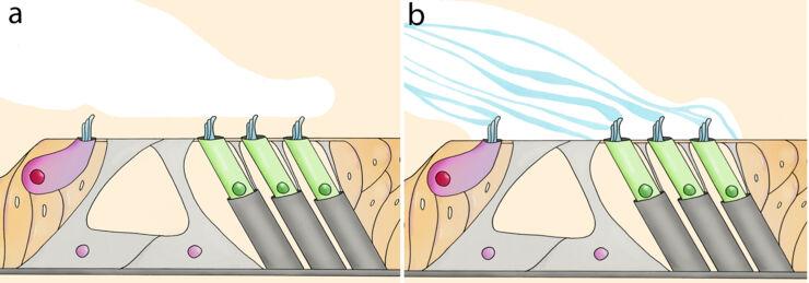 illustration inner ear.